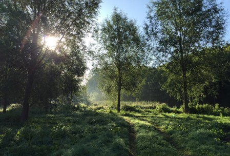 Early morning sunlight